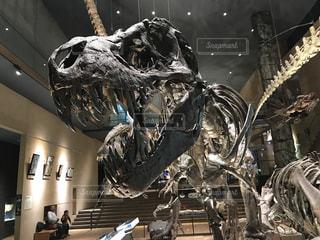表示の恐竜の写真・画像素材[1398244]