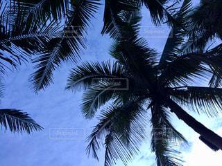 空とヤシの木の写真・画像素材[1399002]