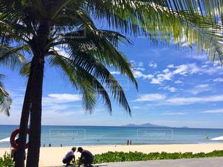 ヤシの木とビーチの写真・画像素材[1399010]