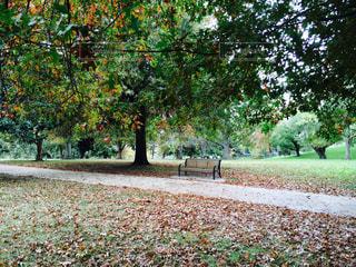 公園の中のベンチの写真・画像素材[1460477]