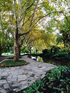 秋の公園の写真・画像素材[1460478]