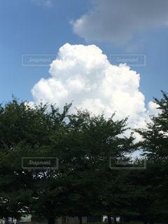 近くの木のアップの写真・画像素材[1400319]