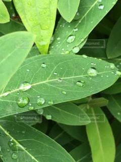 近くの緑の植物をの写真・画像素材[1456066]