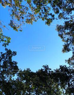 木で空を丸く切り取るの写真・画像素材[1464244]