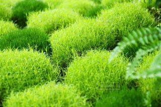 かわいい緑の写真・画像素材[1481775]