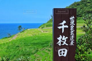 世界農業遺産、千枚田の写真・画像素材[2366620]