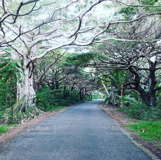 小さな南の島の畦道の写真・画像素材[1443650]
