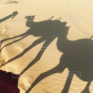 砂漠に映るラクダの影の写真・画像素材[1589368]