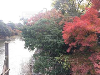 秋の風景の写真・画像素材[1399535]