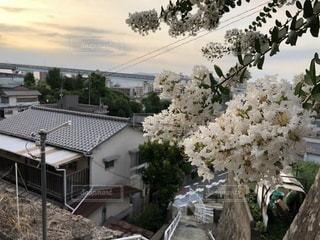 祖母宅の庭先からの風景の写真・画像素材[1400254]