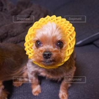 犬の写真・画像素材[44183]