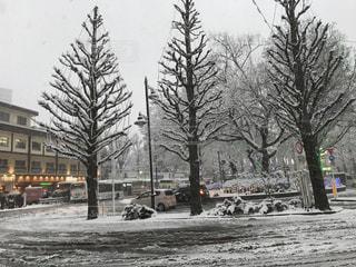地面の雪の木 雪景色の三鷹駅北口の写真・画像素材[1401606]
