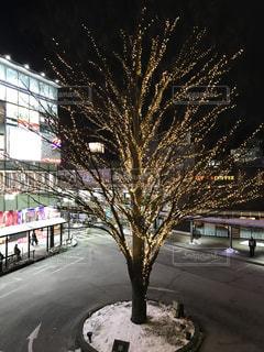三鷹駅南口ロータリーのライトアップの写真・画像素材[1401607]