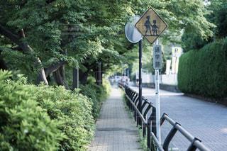 夏の通り道の写真・画像素材[1401210]
