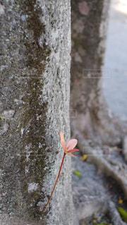 新しい芽の写真・画像素材[1401753]
