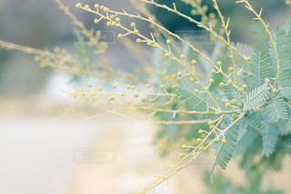 近くの木のアップの写真・画像素材[1403512]