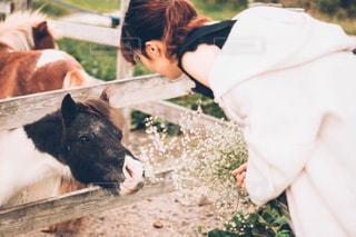 牛をかわいがる人の写真・画像素材[1535348]