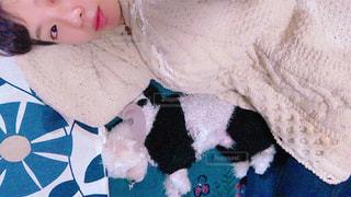ベッドの上に横たわる犬の写真・画像素材[1632721]