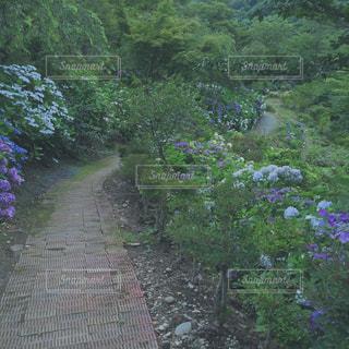 ガーデンの写真・画像素材[1402022]