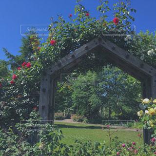 ガーデンの写真・画像素材[1402025]
