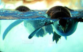 水面の写真・画像素材[1402151]