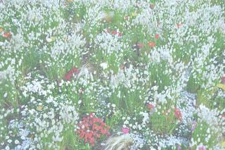 フラワー ガーデンの写真・画像素材[1403624]