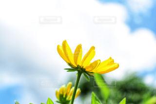 花の裏側の写真・画像素材[1403343]
