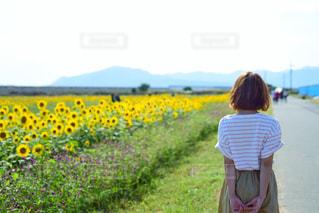 ひまわり畑の写真・画像素材[1403791]