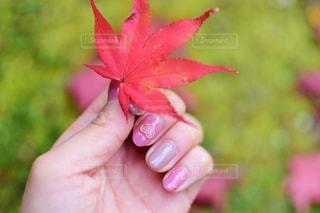 秋とネイルの写真・画像素材[1627190]