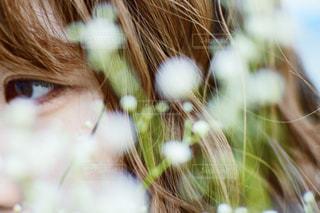 かすみ草の写真・画像素材[1672753]