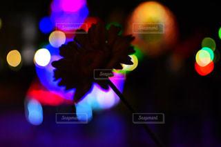 夜の写真・画像素材[1681492]