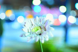 お花とライトの写真・画像素材[1681494]