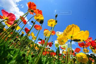 色とりどりの花のグループの写真・画像素材[2131965]