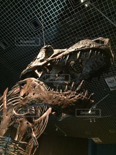 近くに恐竜のアップの写真・画像素材[1413356]