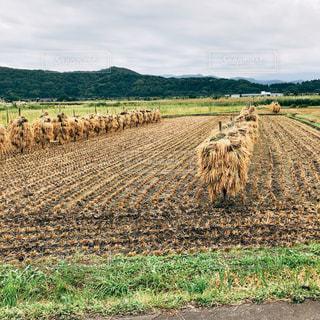 近くに乾いた草のフィールドのの写真・画像素材[1531531]