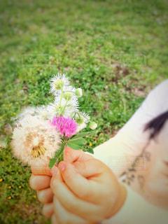 野花の花束の写真・画像素材[1408205]