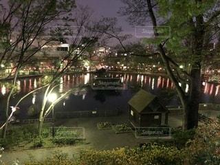 池のある公園の夜の写真・画像素材[1406561]