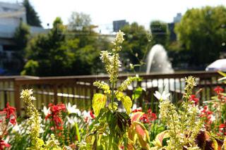 草花と噴水の写真・画像素材[1413504]
