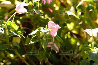 花の写真・画像素材[1413505]