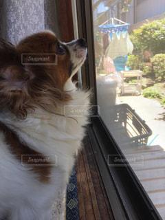 窓の前に座っている犬の写真・画像素材[1407204]