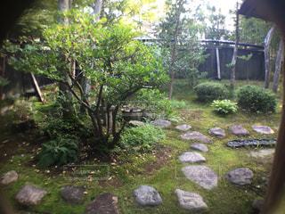 庭園の写真・画像素材[1408259]