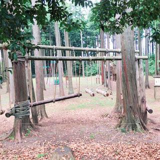 森林アスレチックの写真・画像素材[1407192]