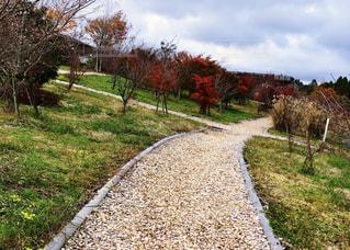 桜ともみじの写真・画像素材[1612286]