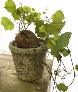 木の枝に花の花瓶の写真・画像素材[1407749]