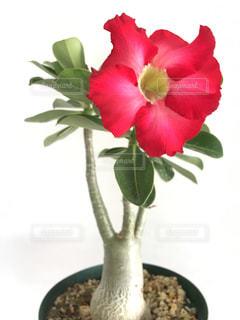 テーブルの上に座っての花で一杯の花瓶の写真・画像素材[1407844]