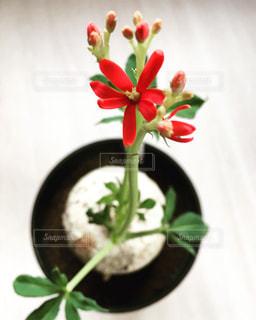 塊根植物の写真・画像素材[1410629]