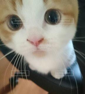 猫 - No.44589