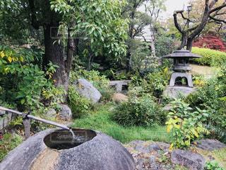 手水鉢と石燈籠のある風景の写真・画像素材[1636656]