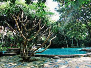 木の隣にプールの写真・画像素材[1409689]