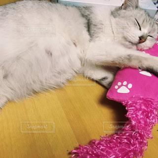 テーブルの上に横になっている猫の写真・画像素材[1408763]
